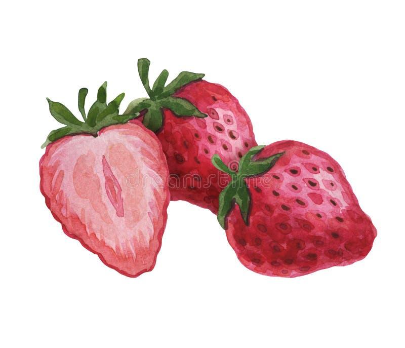 Frutos da aquarela Fruta suculenta Ilustra??o do alimento Frutos doces, suculentos ilustração stock