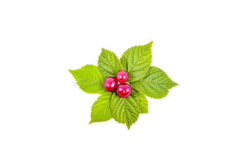 Frutos da cereja de Nanking com as folhas Isolado em um branco imagens de stock royalty free