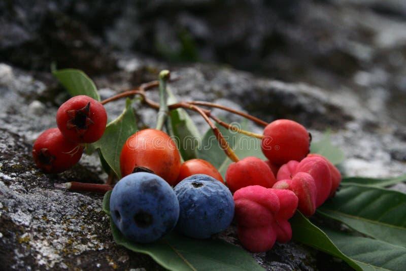 Frutos da floresta fotografia de stock