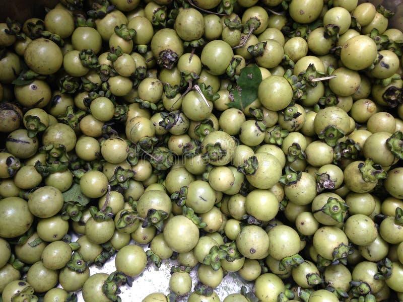 Frutos de árvore verdes novos do ébano, mollis do Diospyros, no grande recipiente de aço inoxidável imagem de stock royalty free
