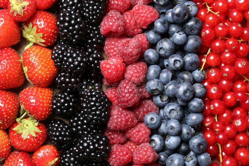 Frutos de baga em seguido imagens de stock royalty free