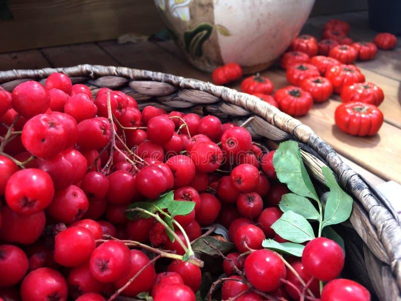 Frutos do outono fotografia de stock