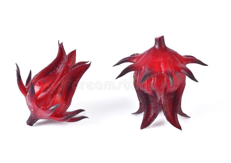 Frutos do sabdariffa ou do roselle do hibiscus isolados no backgrou branco fotos de stock