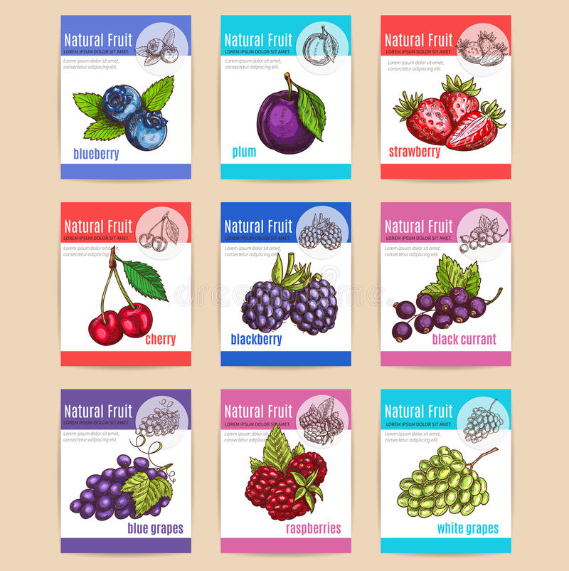 Frutos e cartazes naturais das bagas ilustração do vetor