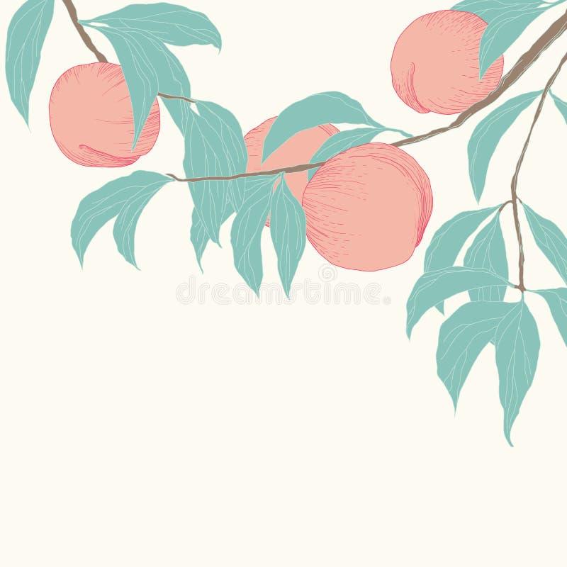 Frutos e folhas tirados mão do pêssego ilustração royalty free