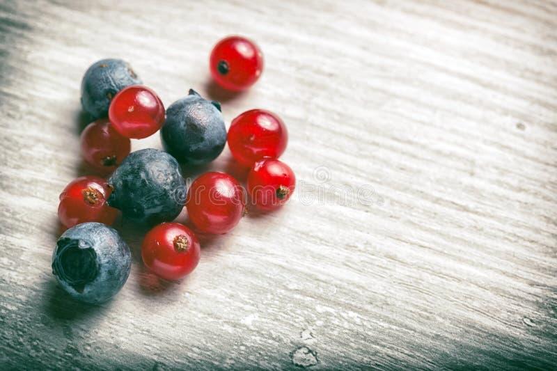 Frutos frescos da floresta imagem de stock