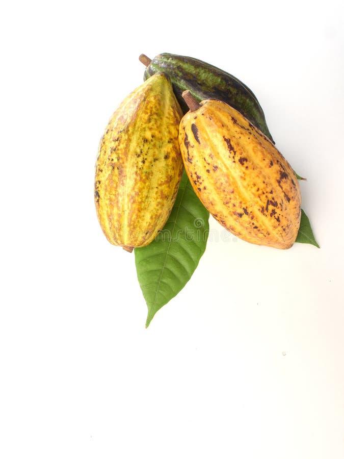 Frutos frescos do cacau com folha verde imagens de stock
