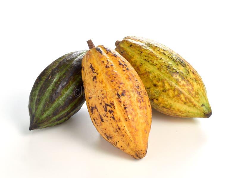 Frutos frescos do cacau fotografia de stock