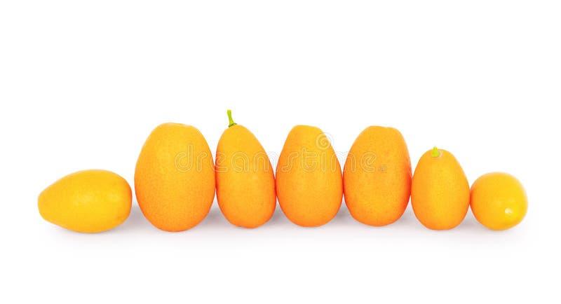 Frutos maduros do kumquat no fundo branco imagem de stock