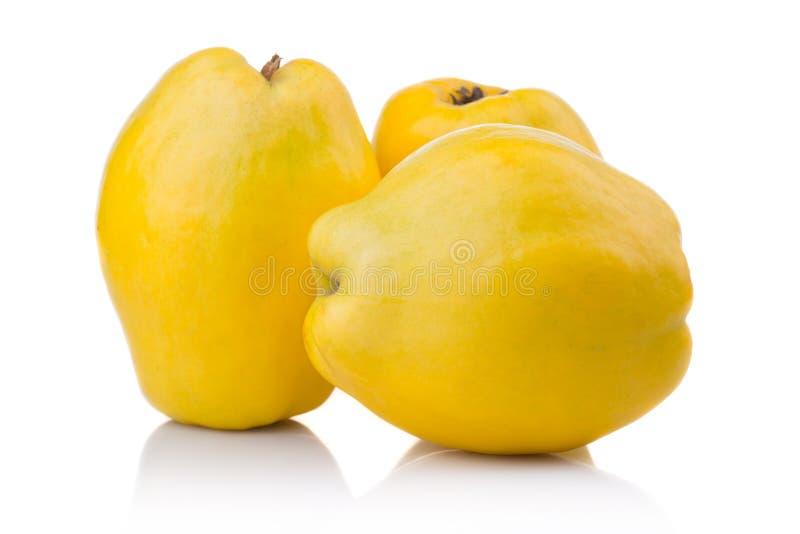 Frutos maduros do marmelo com a folha e a fatia isoladas imagem de stock