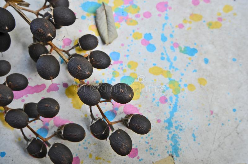 Frutos secos negros de la madera salvaje en piso del color fotografía de archivo libre de regalías