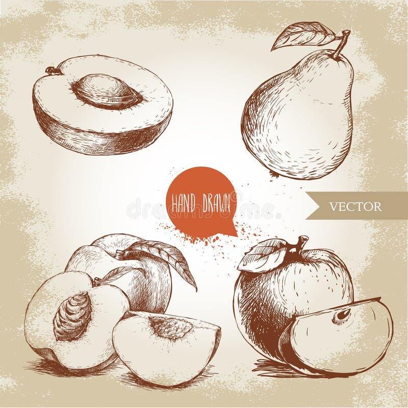 Frutos tirados mão do estilo do esboço ajustados Abricó meio, pêssegos, pera inteira, maçãs Ilustração do vetor do alimento de Ec ilustração do vetor