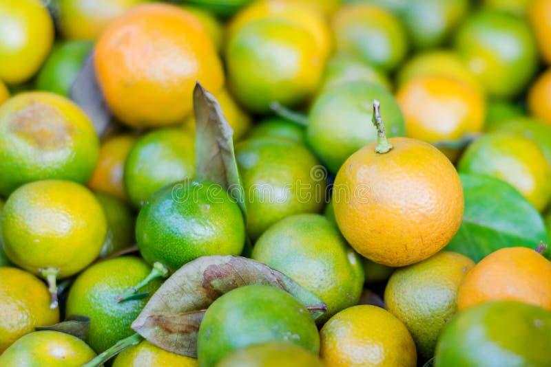 Frutos verdes e alaranjados do limão imagens de stock