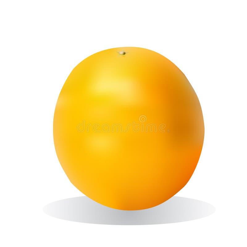 Frutta arancione luminosa illustrazione vettoriale