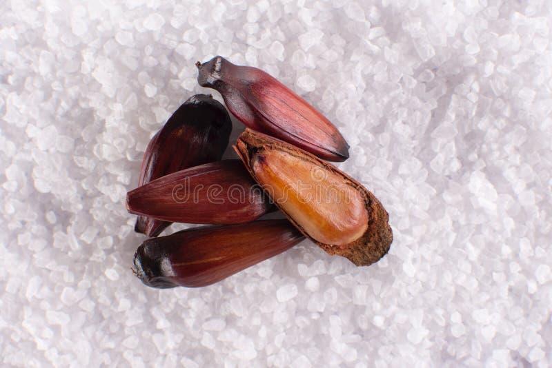 Frutta brasiliana del pignone con a metà aperto nel fondo del sale grosso in visto da sopra immagine stock libera da diritti