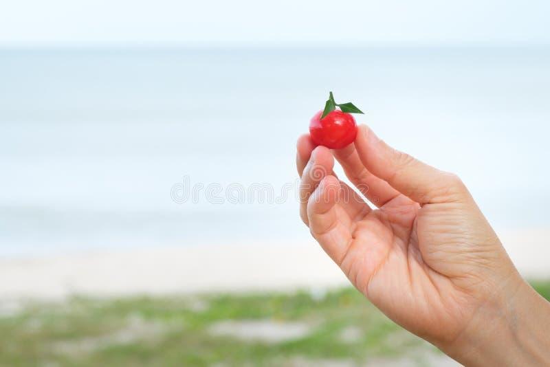 Frutta d'imitazione Deletable immagini stock libere da diritti
