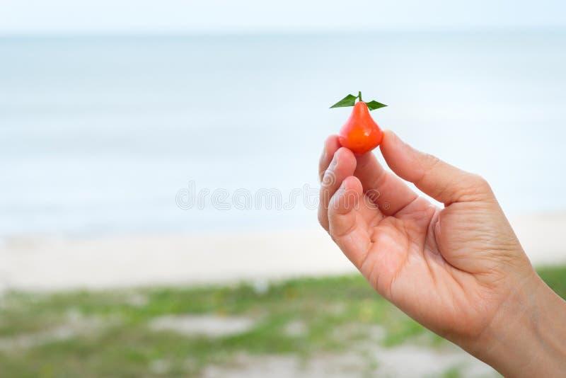 Frutta d'imitazione Deletable fotografie stock