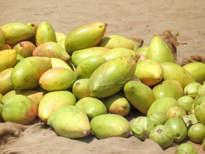 Frutta del mango fotografia stock