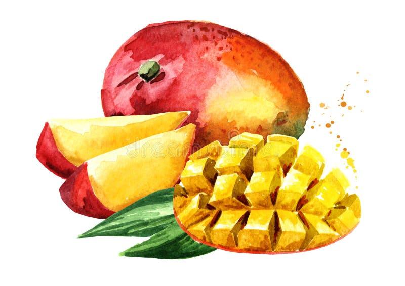 Frutta del mango con i cubi del mango Illustrazione disegnata a mano dell'acquerello, isolata su fondo bianco royalty illustrazione gratis