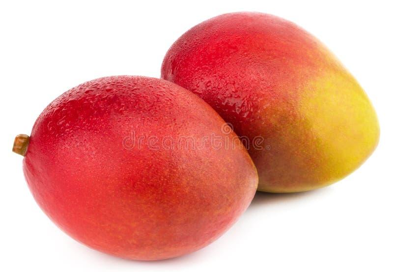Frutta del mango con le gocce di acqua Isolato su una priorità bassa bianca fotografia stock
