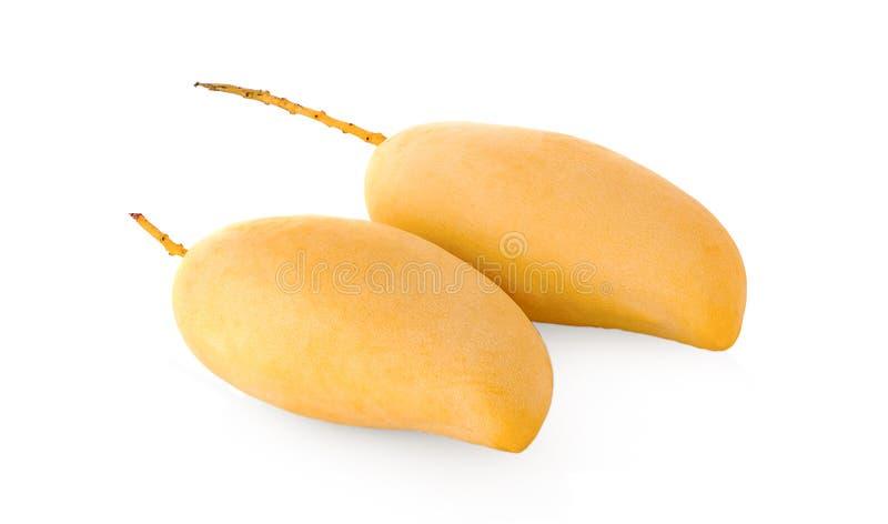 Frutta del mango isolata su fondo bianco fotografie stock libere da diritti