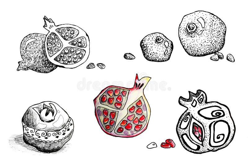 Frutta del melograno nello stile grafico isolata su fondo bianco Progettazione dei menu, carte, ambiti di provenienza, modelli, e illustrazione di stock