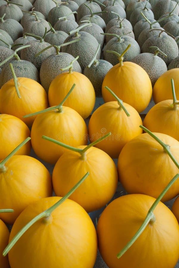 Frutta del melone immagini stock