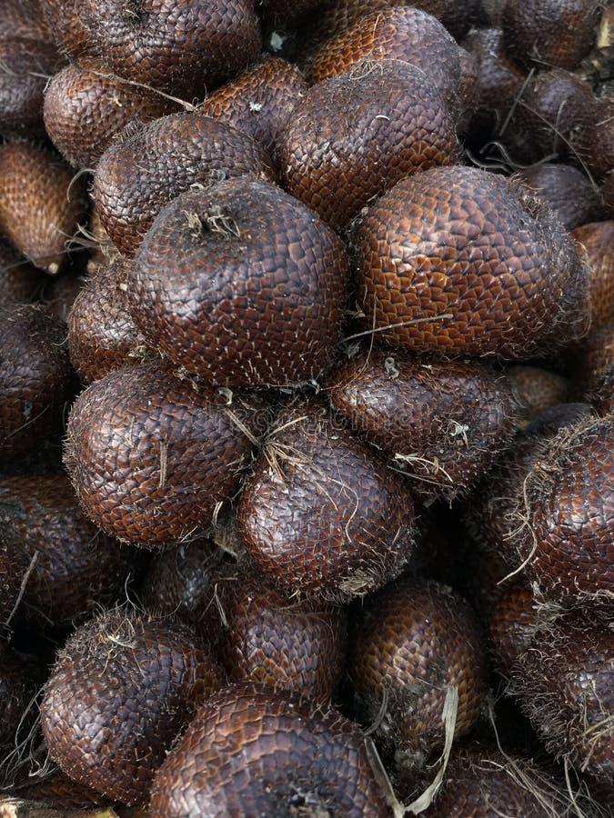 frutta del Pelle-serpente pronta per raccogliere immagine stock
