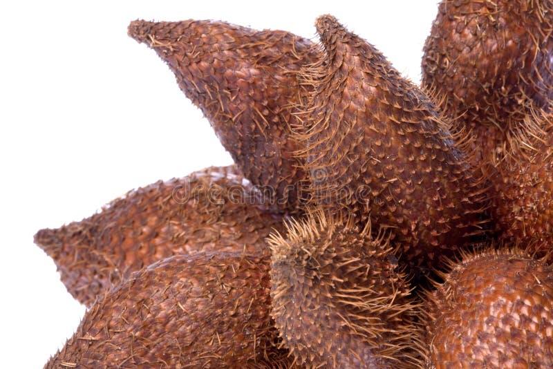 Frutta del serpente isolata immagini stock