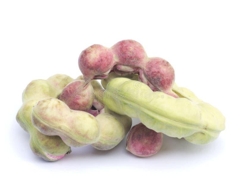 Frutta del tamarindo di Manila immagini stock