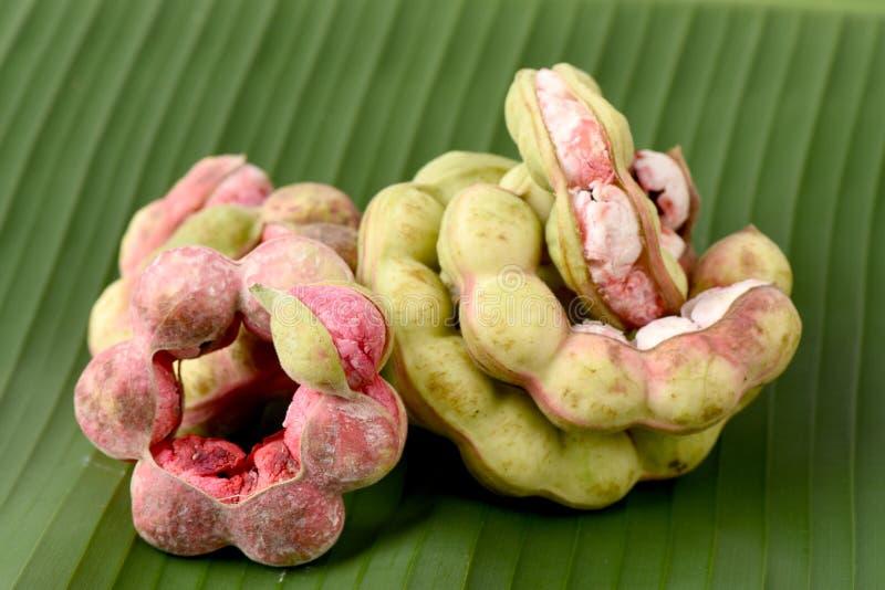 Frutta del tamarindo di Manila (dulce Benth del Pithecellobium ) frutta isolata su fondo bianco fotografia stock
