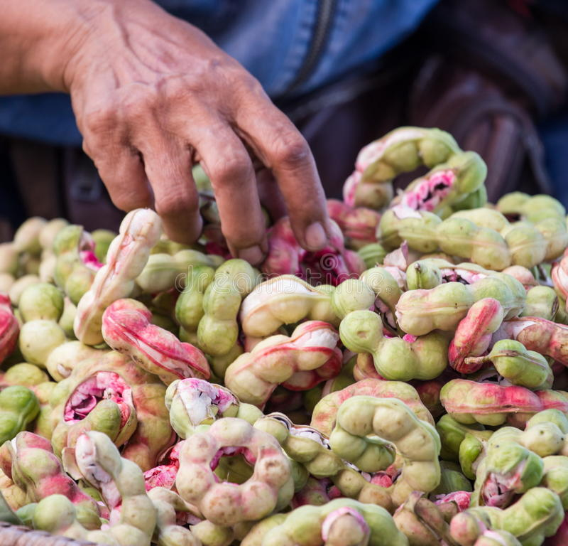 Frutta del tamarindo di Manila (pithecellobium dulce Benth.) immagini stock