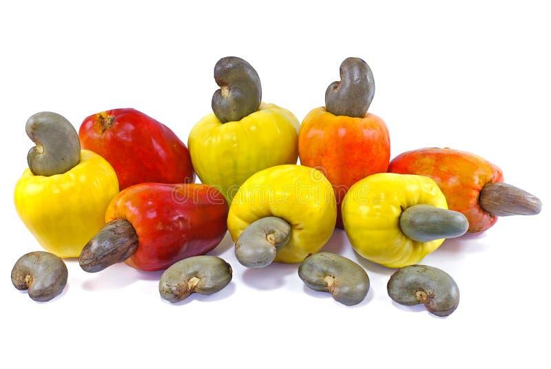 Frutta dell'anacardio isolata su fondo bianco fotografie stock libere da diritti