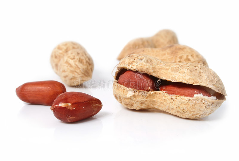 Frutta dell'arachide isolata su priorità bassa bianca immagine stock libera da diritti