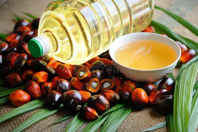Frutta dell'olio di palma fotografie stock libere da diritti