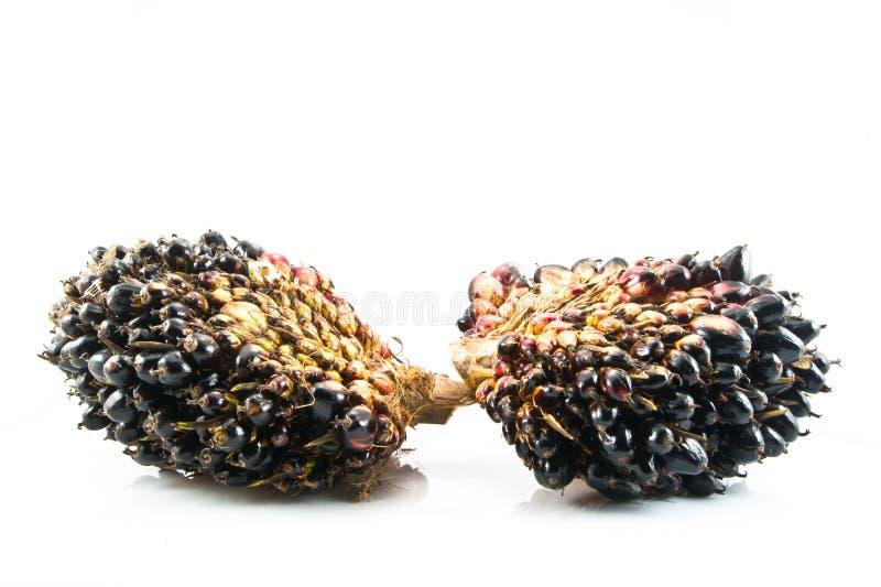 Frutta dell'olio di palma isolata immagini stock libere da diritti