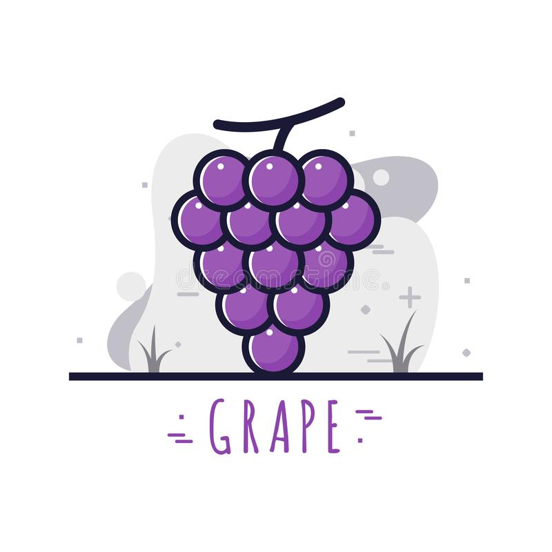 Frutta dell'uva fresca illustrazione vettoriale