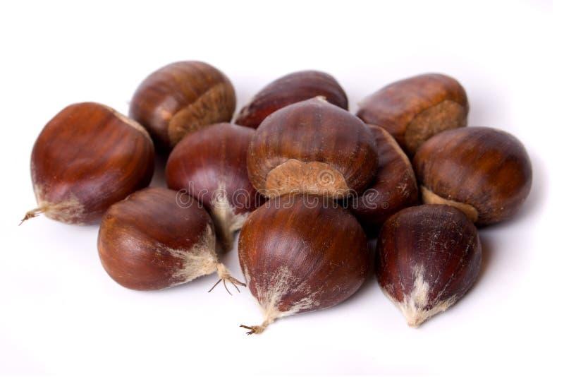 Frutta della castagna isolata su bianco immagine stock libera da diritti