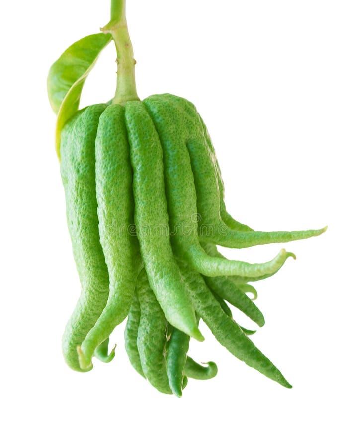Frutta della mano di BuÄha immagine stock
