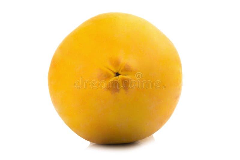 Frutta della papaia intestazione del primo piano Arancia di colore Asiatico Isolato su bianco fotografia stock