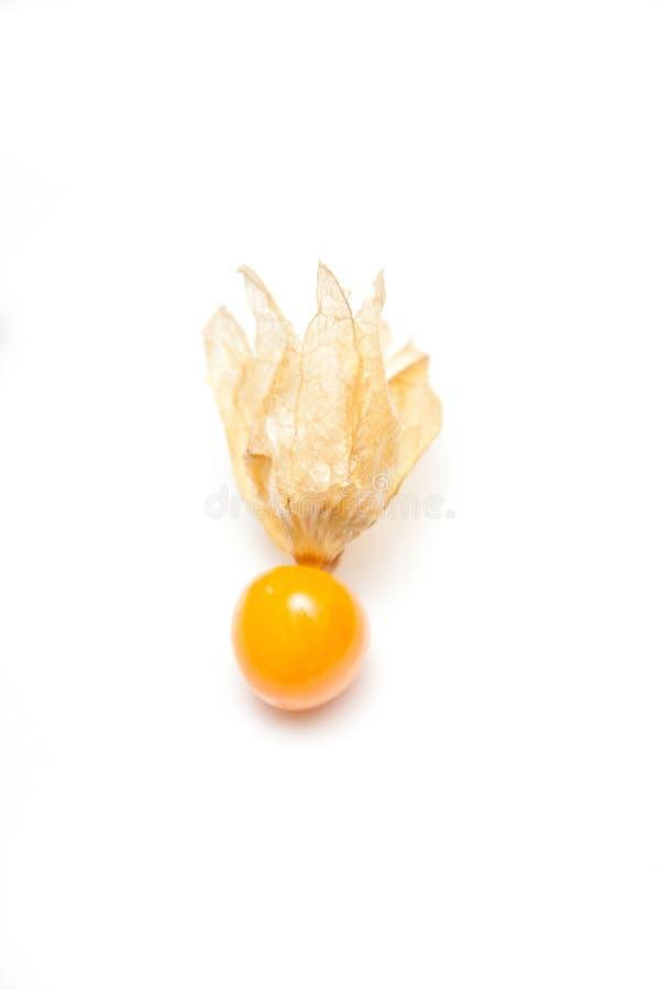 Frutta della pianta del Physalis immagini stock