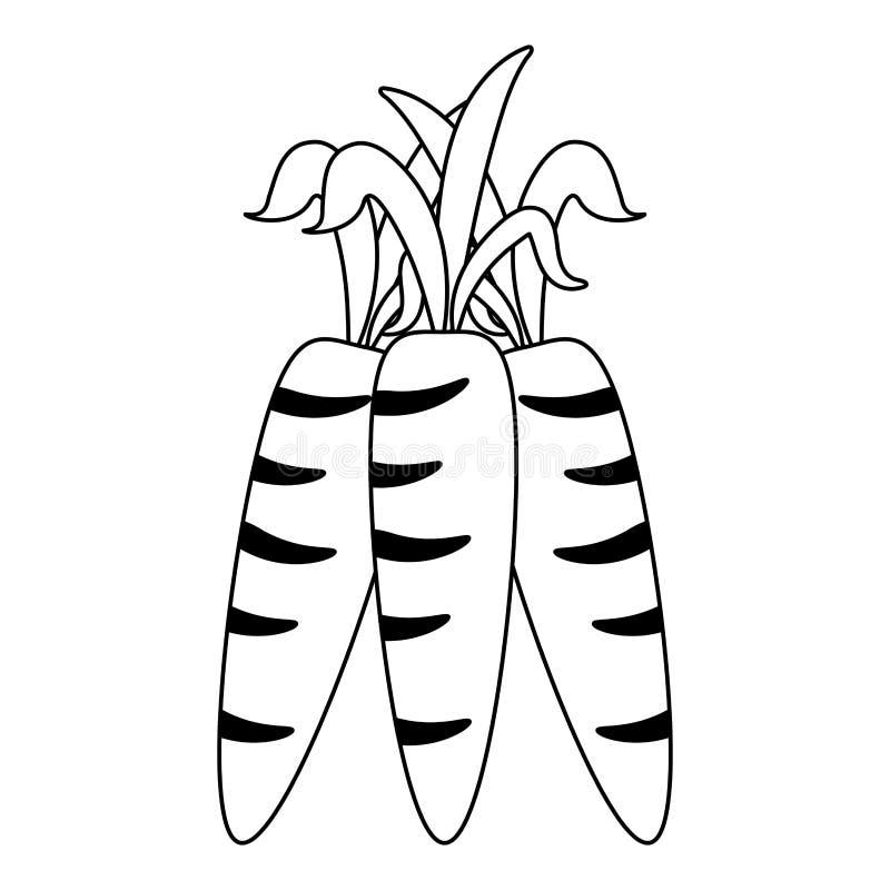 Frutta delle verdure delle carote illustrazione vettoriale