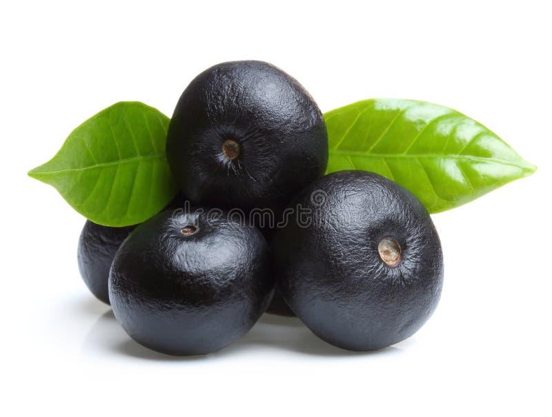 Frutta di acai di Amazon con la foglia immagine stock libera da diritti