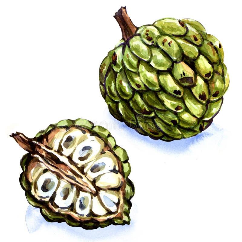 Frutta di Anone isolata illustrazione vettoriale