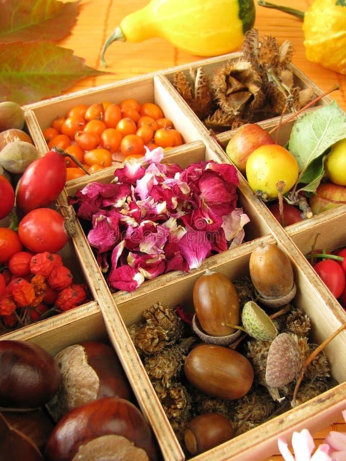 Frutta di caduta e fiori di rosa secchi fotografie stock libere da diritti