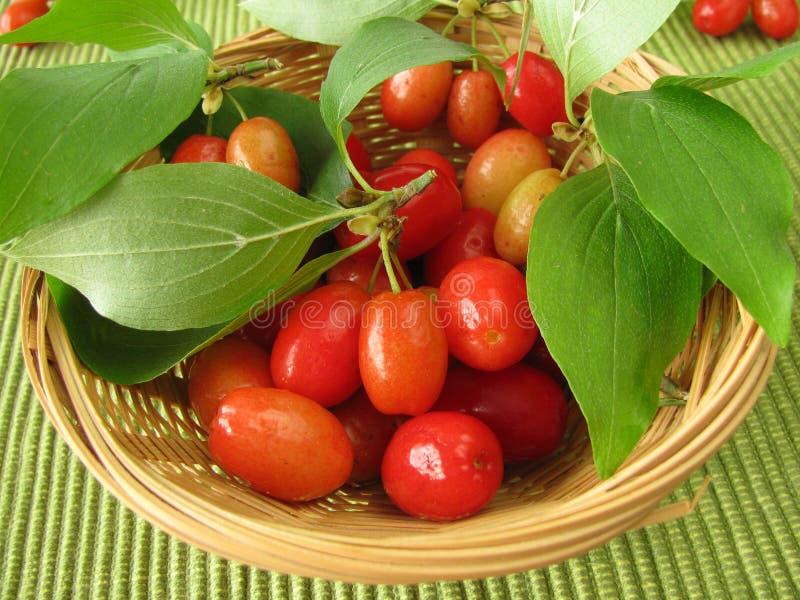 Frutta di cornel in cestino fotografia stock libera da diritti