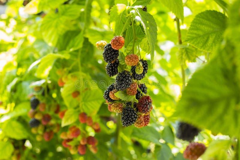 Frutta di estate fotografie stock