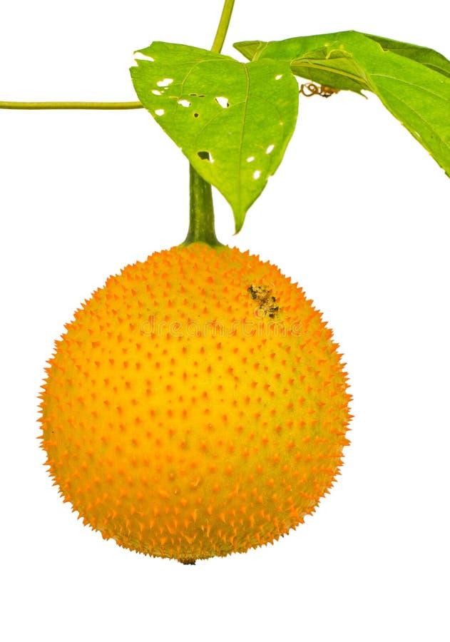 Frutta di Gac, frutti per sano. immagini stock