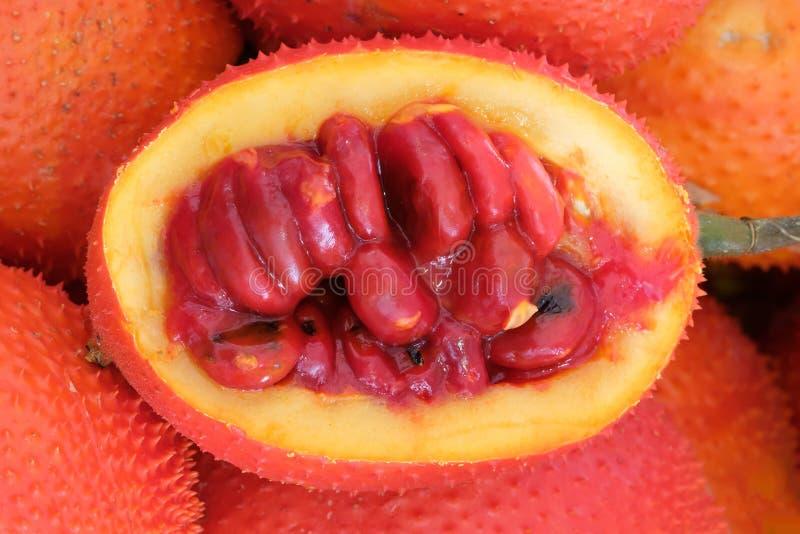 Frutta di Gac, giaca del bambino, zucca amara coperta di spine, Grourd dolce immagine stock