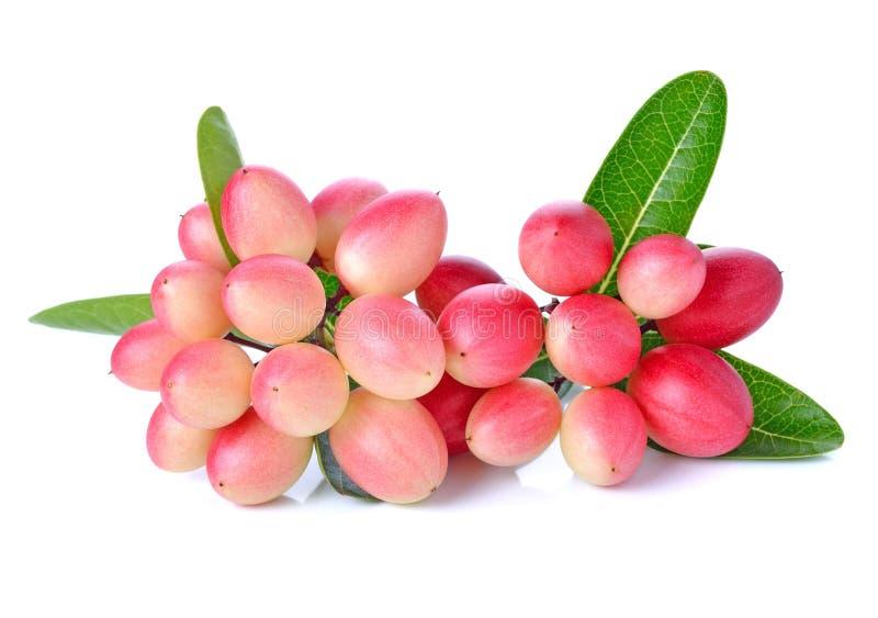 Frutta di Karanda fotografia stock